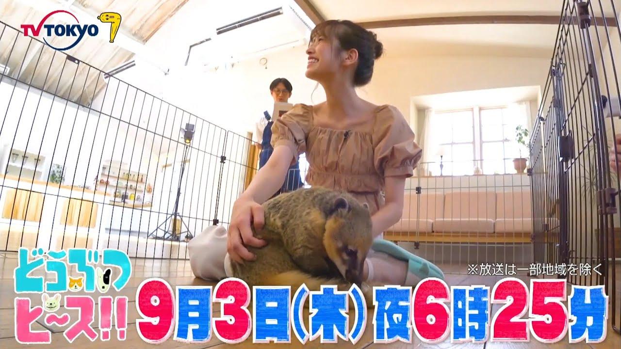 「どうぶつピース!!」日向坂コラボ企画!おたけ&キャプテンが赤ちゃん珍ペットのお母さんに!